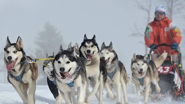 Od 12. do 13. ledna budou psí spřežení brázdit okolí Abertam v rámci Eduardova sprintu a MIDu, který společně pořádají Krušnohorský sportovní klub psích spřežení a obec Abertamy.