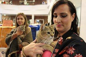 Kočičí výstava