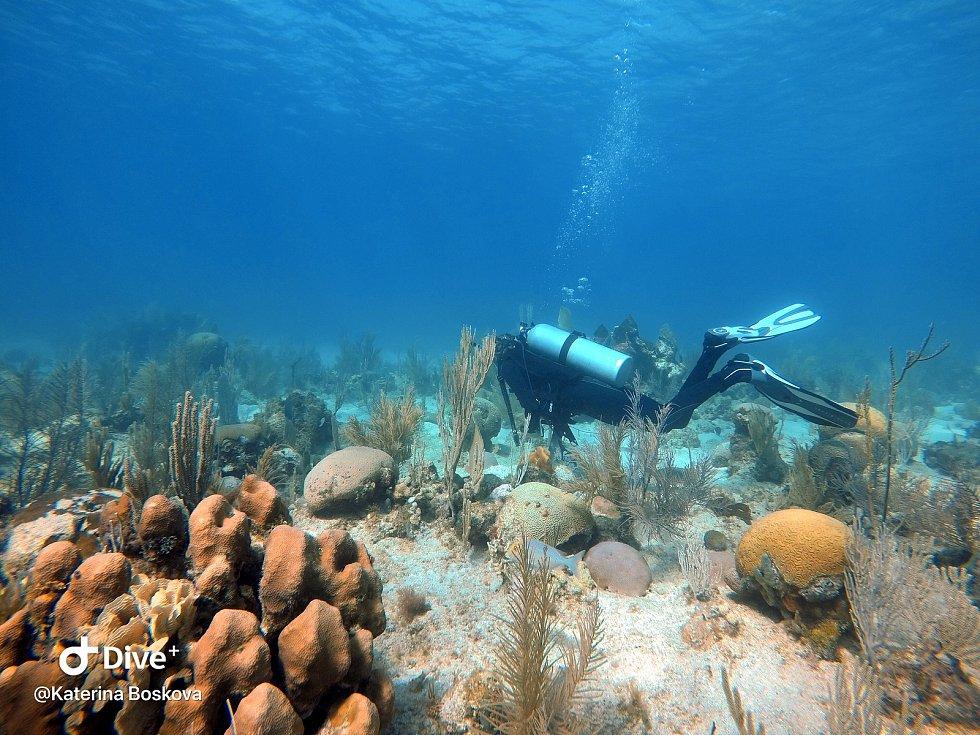 Potápění v moři je součástí studia. Patří k němu ale i třeba průzkum suchozemského bahna.