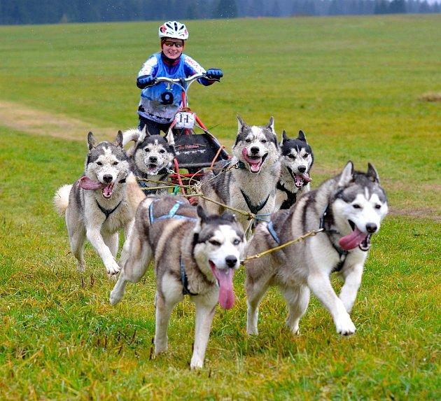 Siberian Husky víkend 2017, který pořádá Siberian husky klub a Klub českého horského psa odstartuje v pátek 28. dubna.