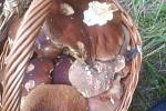 Houby nalezené na Karlovarsku.