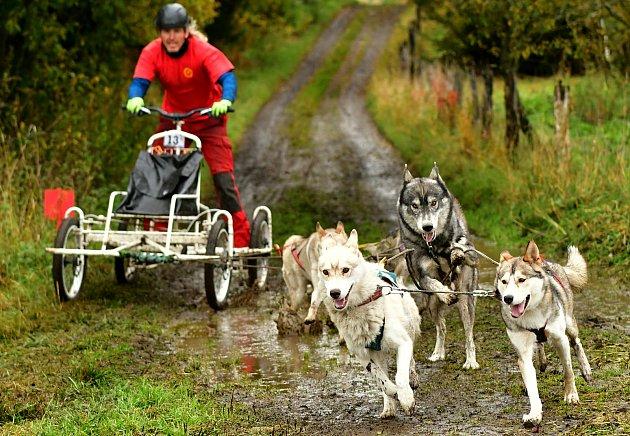 Stovka  mašérů se se svými psími spřeženími po dva víkendové dny proháněla po polních cestách a loukách vokolí Abertam vrámci Abertamského sprintu – Memoriálu Jaroslava Svobody.