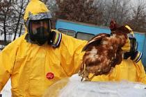 Veterináři zlikvidují na Chebsku tisíce kusů drůbeže.