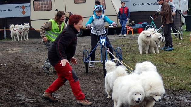 Abertamské závody psích spřežení na kárách