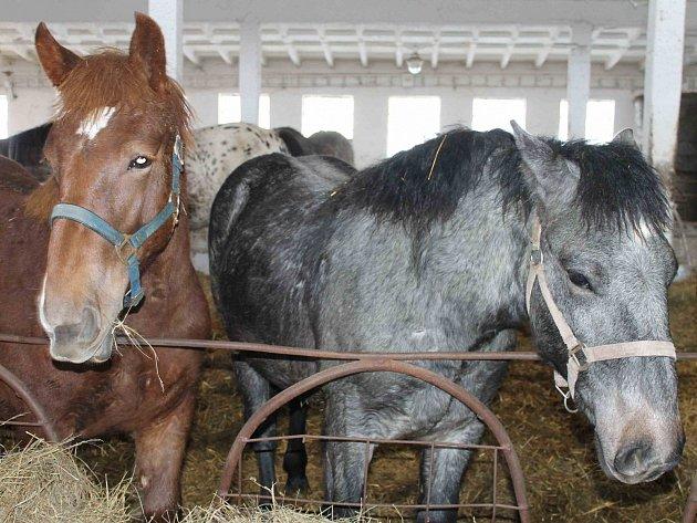 Koníkům hrozil smutný osud, naštěstí se vše v dobré obrátilo.