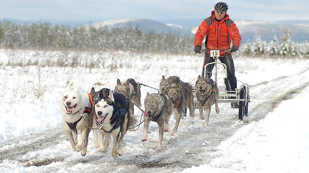 Závody psích spřežení.
