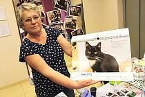 Kalendář s kočičími modelkami pomůže útulku provozovanému kraslickému sdružením Konec toulání.