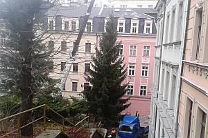 Vánoční strom byl vloni z Moravské ulice. Odkud bude letos?