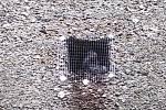Uvěznění holubi za mřížkami na opěrné zdi ve Vřídelní ulici v Karlových Varech