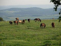 Společná pastva koní ze spolku Macík