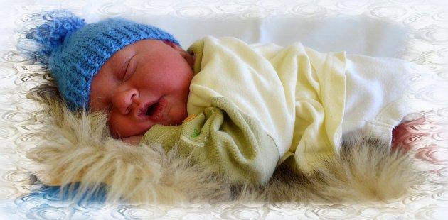 Daneček Šedivý z Teplé se narodil 12. 2. 2014