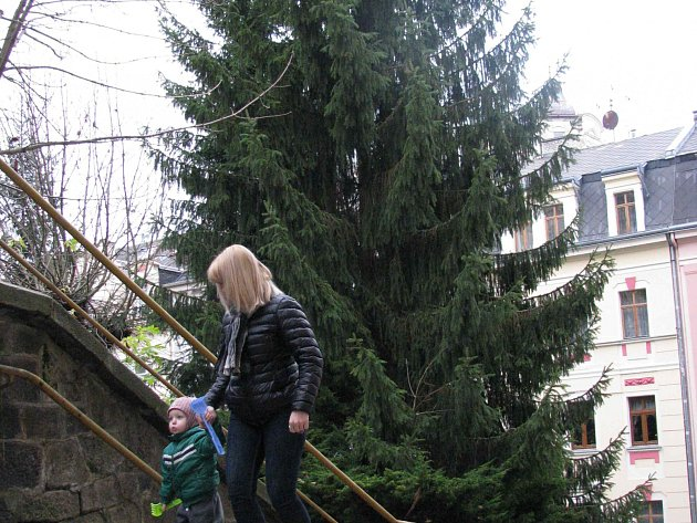 VÁNOČNÍ STROMY většinou města nenakupují, ale využívají je z prořezávek tam, kde musí z různých důvodů ustoupit. To je i případ karlovarského stromu, který roste v Moravské ulici.