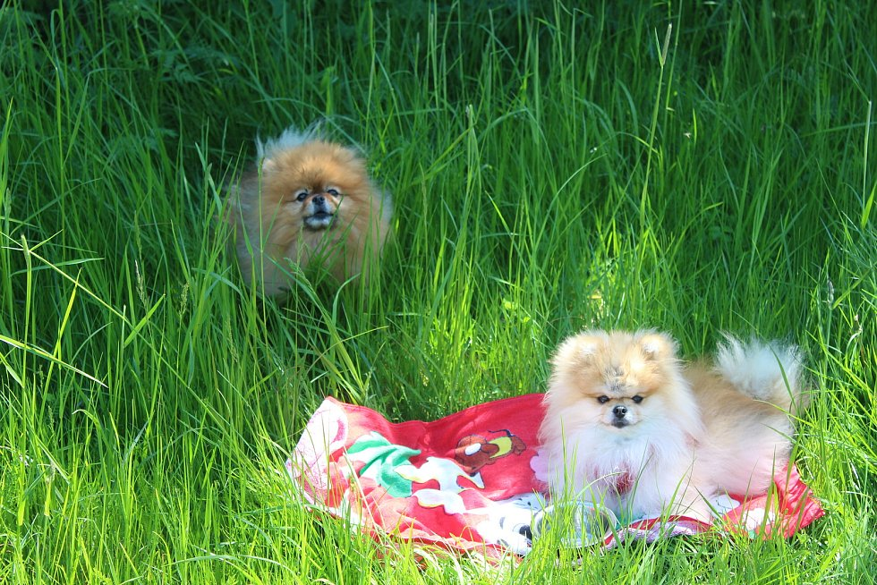 Zatopený lom vyhledávají i přespolní, a to kvůli přírodnímu rázu. Už v těchto dnech se tu koupají první odvážlivci, a to nejen psi.