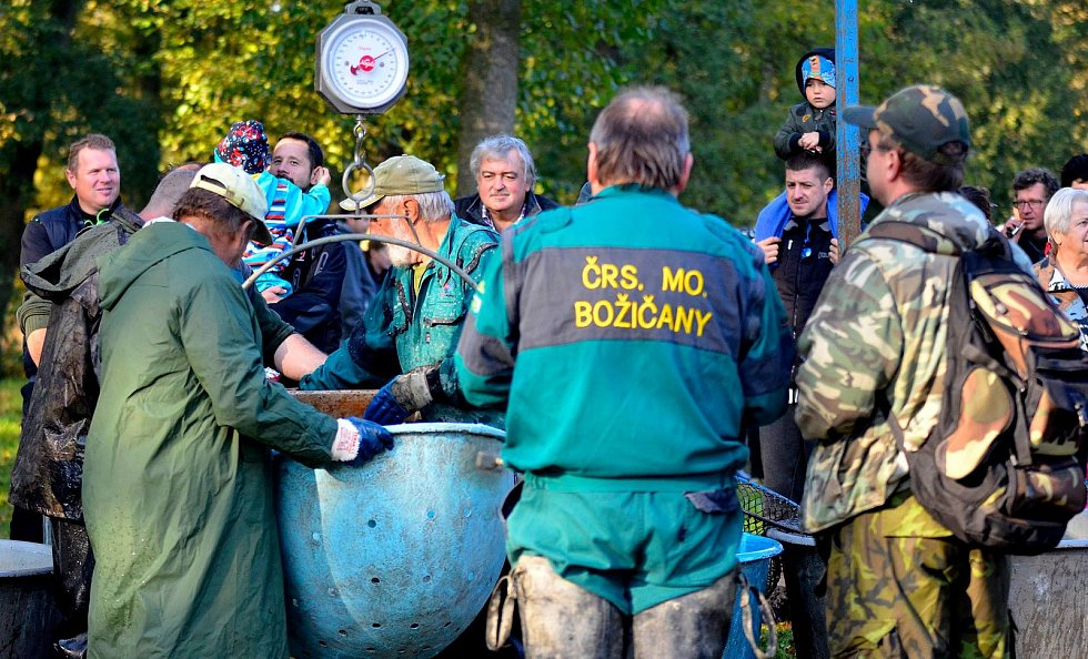 Výlov rybníka Borovice.
