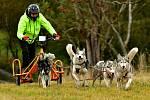 Stovka  mašérů se se svými psími spřeženími po dva víkendové dny proháněla po polních cestách a loukách v okolí Abertam v rámci Abertamského sprintu – Memoriálu Jaroslava Svobody.