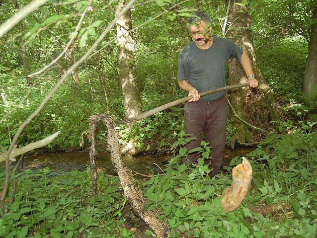 V lesích nedaleko od Ostrova na Karlovarsku nalezl náhodný chodec se psem těla minimálně tří mrtvých hadů, s nějvětší pravděpodobností krajt. Jedna z nich měřila více než čtyři metry.