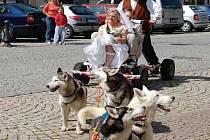 JAKO VE FILMU. Svatbu jako ve filmu z divoké Aljašky měli dnes už manželé Jana a Radek na ostrovské radnici. Kolem náměstí je po svatebním obřadu povozili nádherní sibiřští huskyové.