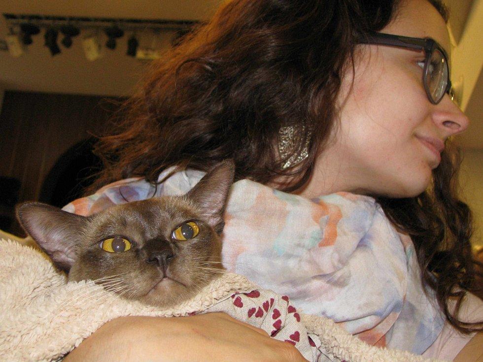 Přes sto chovatelů a minimálně jednou tolik koček se muselo vejít do karlovarského Lidového domu na víkendovou Mezinárodní výstavu koček.