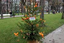Na adventních trzích v Karlových Varech zdobily děti z mateřských školek vlastní vánoční stromečky.