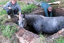 Záchrana koně z odpadní jímky ve Veselově