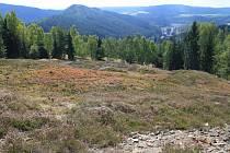 JEDNÍM Z ÚZEMÍ, jehož se týká vyhlášení nových přírodních památek, je například Tisovec u Kraslic.
