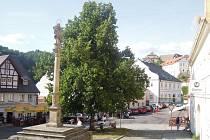 V Bečově nad Teplou se rozhořel boj o lípu na náměstí.