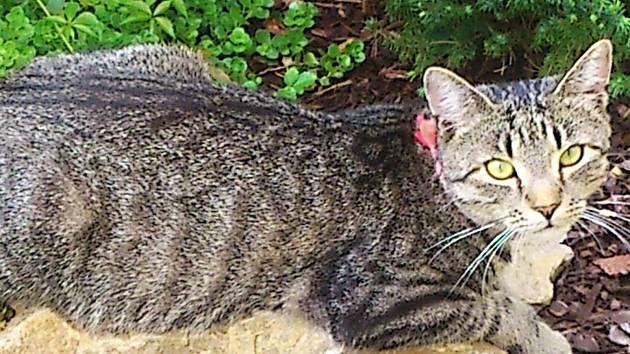Kočky a kocouři všude, kam oko dohlédne. Tak to bude vypadat tuto sobotu a neděli vždy od 10 do 17 hodin v Lidovém domě v Karlových Varech