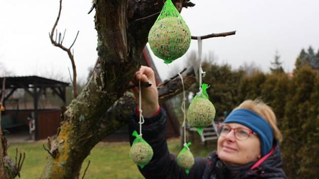 STROMEK PRO PTÁKY. Na Štědrý den lidé zdobili stromky vánoční pro radost dětí. Dostalo se ale také na stromky jiné. Tento ozdobili zahrádkáři v Ostrově lojovými koulemi pro ptáky.