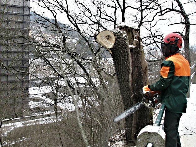 ZÁSAHY DO ZELENĚ vyvolávají často nesouhlasné reakce lidí, zvláště když jde o kácení vzrostlých stromů. Někdy je však nutné staré a suché stromy odstranit, jako v tomto případě ve svazích nad karlovarským hotelem Thermal, aby se nestaly hrozbou pro své ok