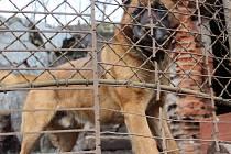 Lidem ze Stráže není osud psa lhostejný.