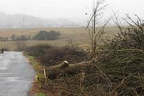 Sčítání má kromě jiného ukázat, které stromy podél silnic bude třeba odstranit kvůli jejich špatnému stavu.