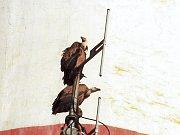 Neobyčejní návštěvníci z ptačí říše zavítali do Sokolova. S největší pravděpodobností se jedná o supa hnědého. Jako odpočívadlo pro mezipřistání si vyhlédli komín sokolovské chemičky, kde pobyli několik hodin.