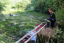 Kvůli vyšetřování vraždy na Ašsku museli hasiči odčerpat i vodu z rybníka, kvůli hledání vražedné zbraně