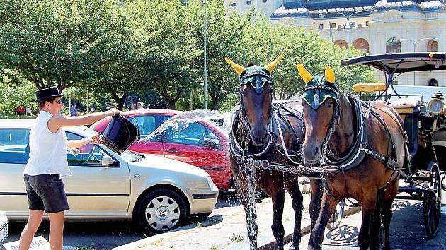 Provozovatelé karlovarské kočárové jízdy nenechají své svěřence ve vedrech trpět.