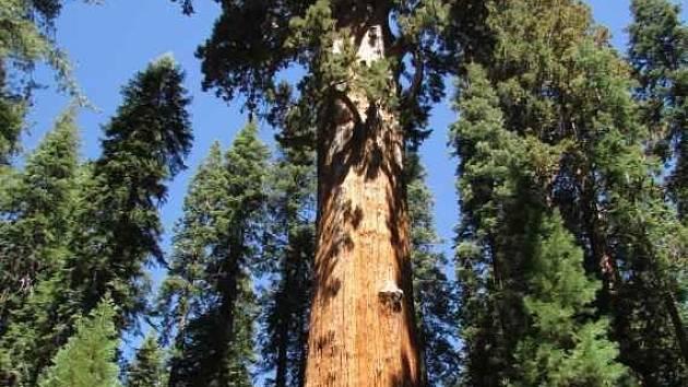 Nejvyšší strom.