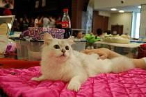 Chovatel Jan Choulík je pořadatelem mezinárodních výstav koček. Ta poslední se konala o víkendu v Lidovém domě. Některá plemena tady byla opravdu raritní a velmi vzácná.