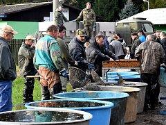 Mnozí se přijdou podívat na výlov rybníka už kvůli tomu, aby si prohlédli sumce Vénu.