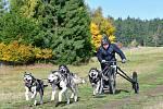 Republikové tituly se o víkendu rozdávaly v rámci mistrovství psích spřežení na suchu v horských Abertamech, kde se představilo bezmála sto čtyřicet mašérů v několika kategoriích.