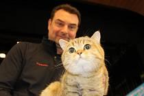 V Karlových Varech se konal 42. a 43. ročník Mezinárodní výstavy koček. K vidění bylo téměř dvě stovky koček mnoha plemen.