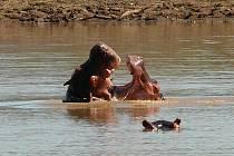 Hroši v Zambezi.
