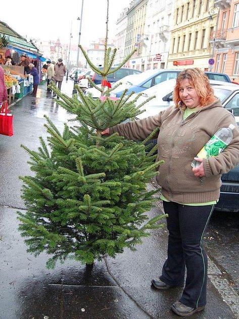 NÁVAL TEPRVE PŘIJDE. Vánoční stromečky se prodávají i ve Varšavské ulici. Výběr je velký. Zatím.