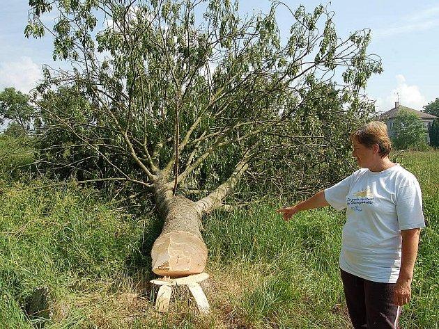 Rozálie Petridesová ukazuje na zdravý strom, který byl o tomto víkendu pokácen.