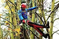 PÉČI O STROMY je nejlepší svěřit odborníkům arboretistům. To je záruka, že zásah bude profesionální.