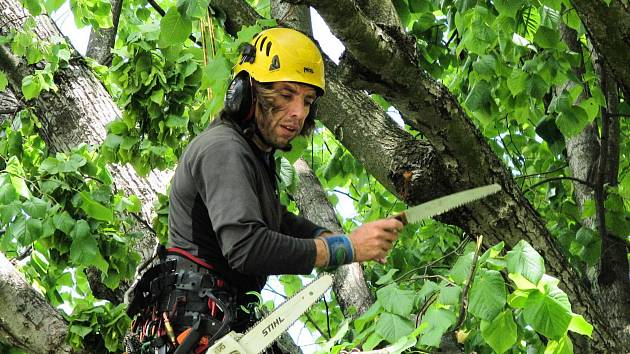 Odbornou péči stromům poskytují odborníci, kteří musí zvládnout i šplhání v jejich korunách.