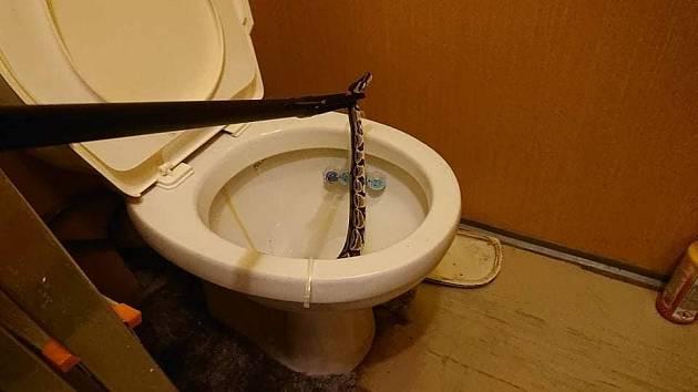 Žena z Ostrova našla v záchodě krajtu