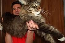 Manažer výstavy Jan Choulík s jednou z koček.