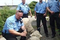 Strážníci zajistili ovce pobíhající po Karlových Varech a předali je zatím do náhradní péče.