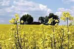 Řada zemědělců pěstuje díky pobídkám státu a Evropské unie plodiny, které pak končí jako biomasa pro kotelny nebo se z nich vyrábí bionafta.