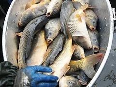 Sezona výlovů začala, ryb bude dostatek. A cena?