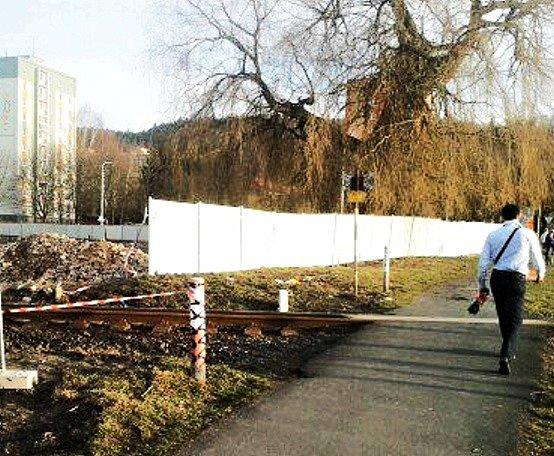 Mezi finalisty charitativní ankety se letos dostala i 119 let stará vrba bílá v karlovarské ulici Šumavská, kterou nominovala 1. Mateřská škola Karlovy Vary.